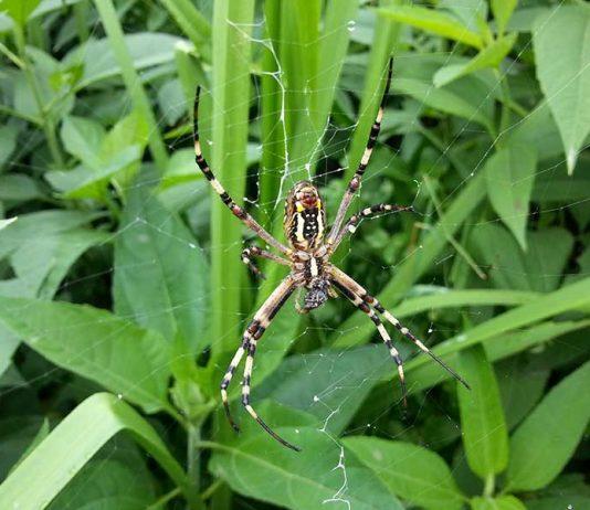عنکبوت خفن